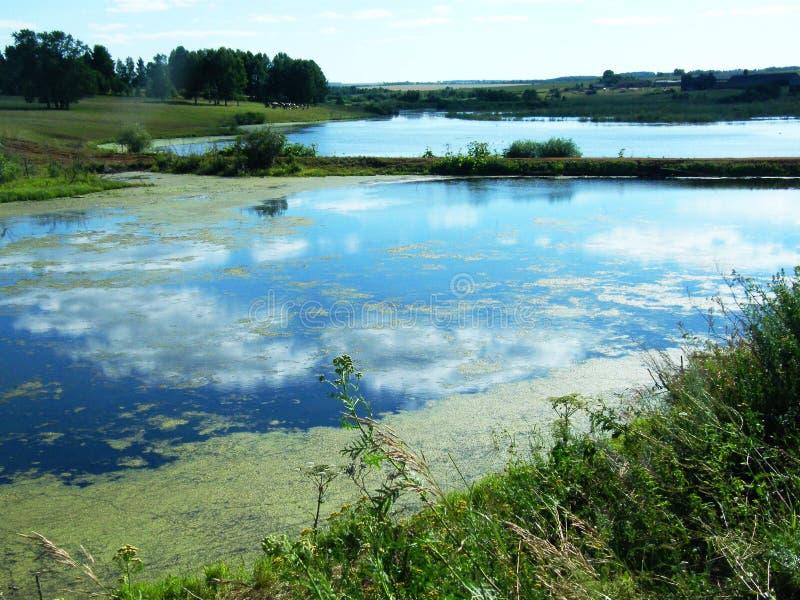 Groen slijm in het moeras stock afbeelding