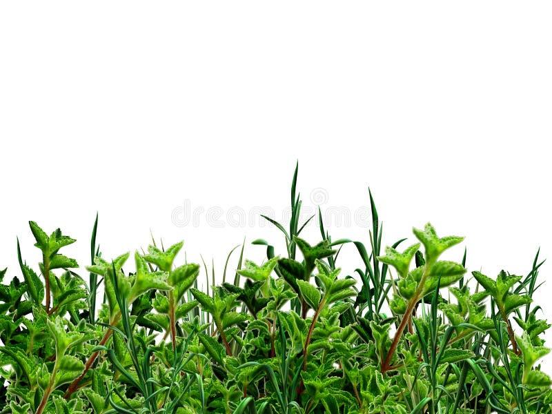 Groen struiken en gras royalty-vrije stock afbeelding