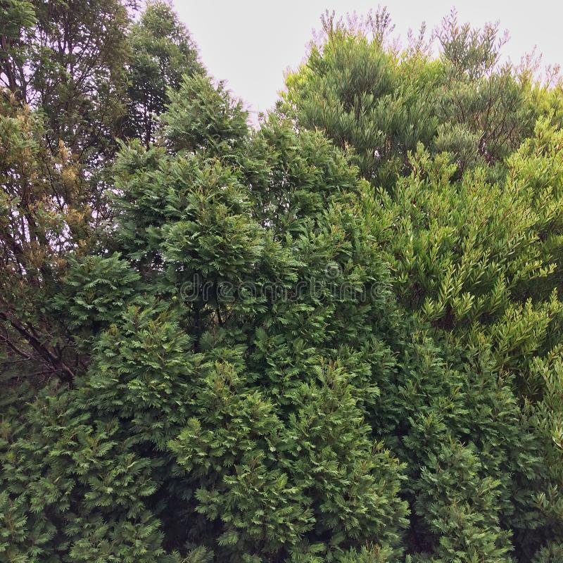 Groen struikgewas stock afbeeldingen