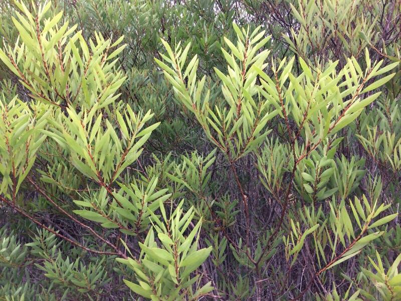 Groen struikgewas stock foto