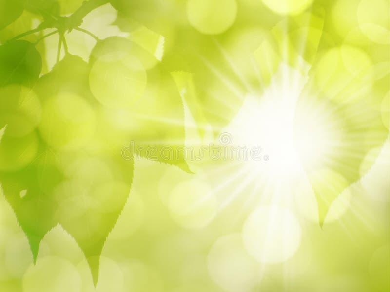Groen Sunny Leaves Nature Background in de Lente en de Zomer royalty-vrije stock foto