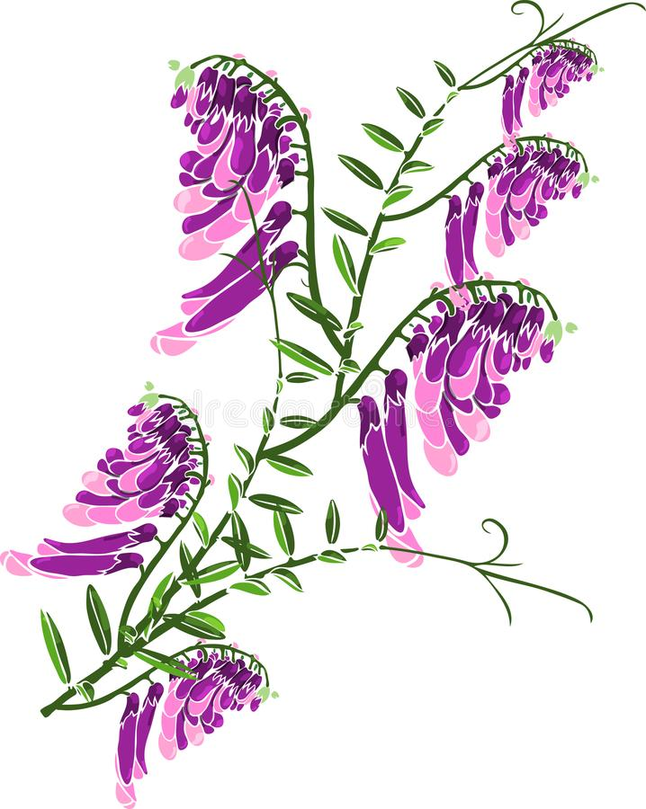 Groen takje met de bloeiende purpere erwten van de bloemenmuis vector illustratie