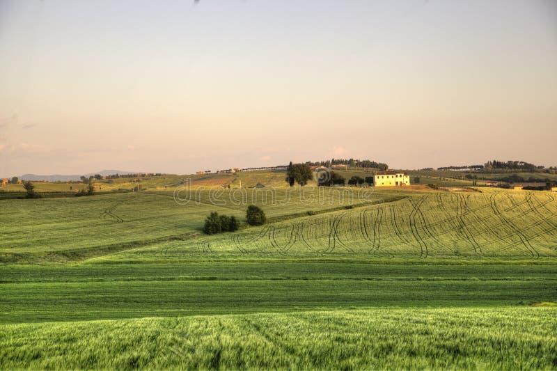 Groen tarwegebied in Juli - Toscanië stock foto's