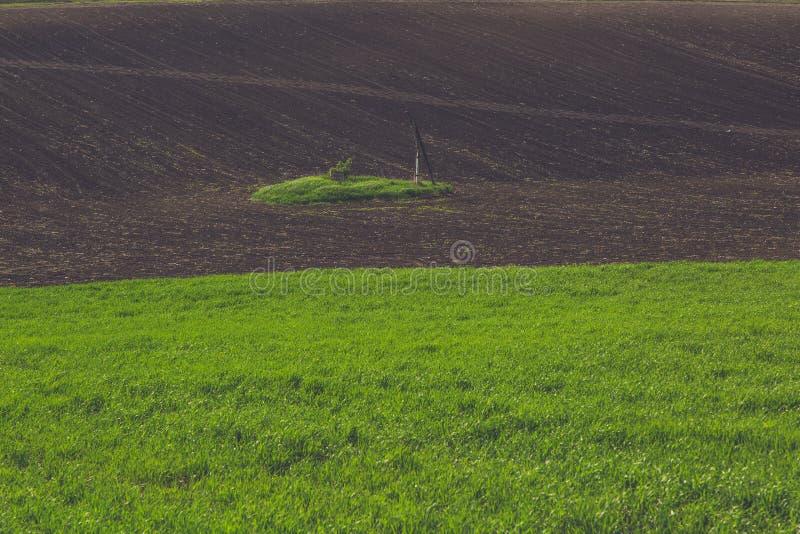Groen tarwegebied royalty-vrije stock foto's