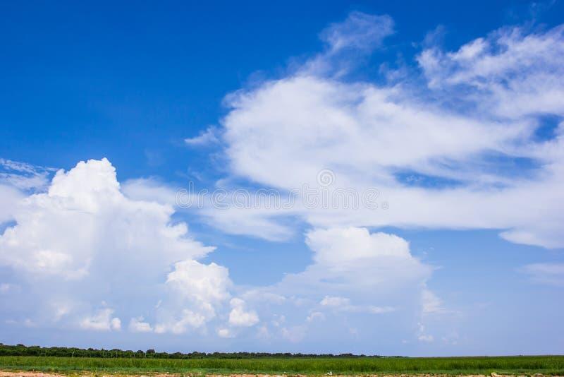 Groen tarwegebied op een achtergrond van blauwe hemel royalty-vrije stock afbeelding