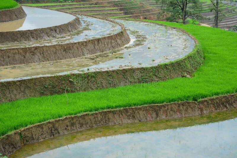 Groen terrasvormig padieveld in Lao Cai, Vietnam royalty-vrije stock foto's