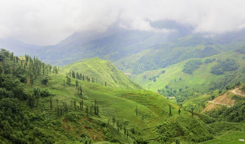 Groen Terrasvormig Padieveld in Sapa, Lao Cai, Noordwestenvietnam stock afbeeldingen