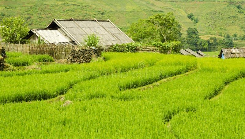 Groen Terrasvormig Padieveld in Sapa, Lao Cai, Noordwestenvietnam royalty-vrije stock afbeeldingen