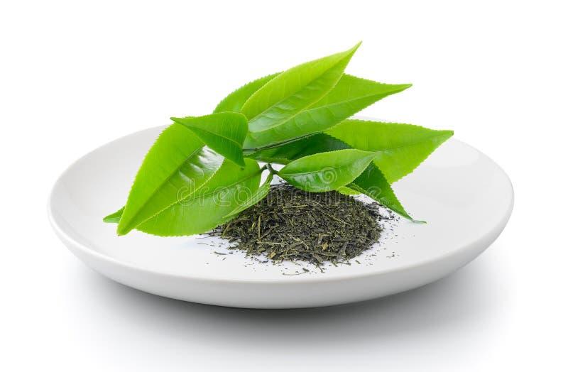 Groen theeblad in een plaat stock foto