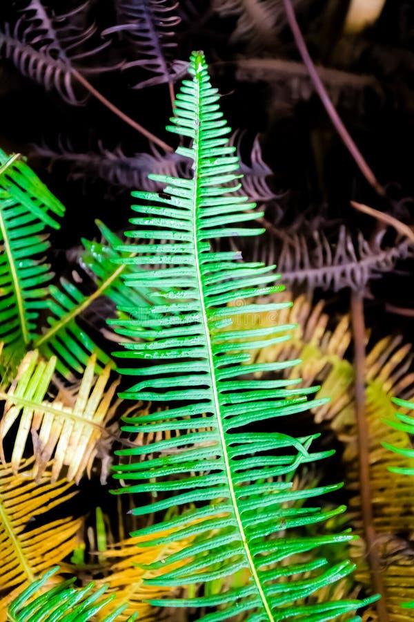 Groen varenblad in het tropische regenwoud stock foto's