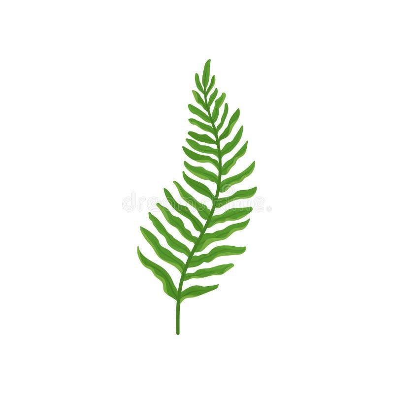 Groen varentakje met bladeren Wilde bosinstallatie met heldergroene bladeren Natuurlijke flora Vlak vectorontwerp stock illustratie