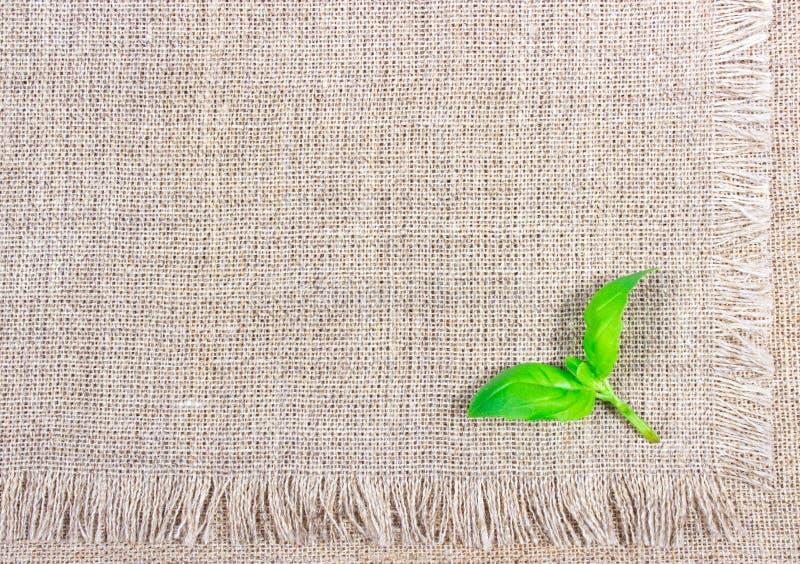 Groen vers basilicum op canvasachtergrond stock fotografie