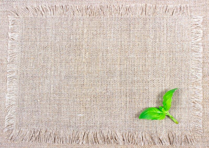 Groen vers basilicum op canvasachtergrond stock foto's