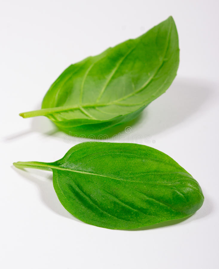 Groen vers basilicum op wit royalty-vrije stock fotografie