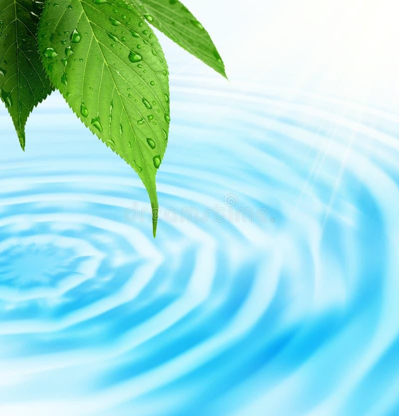 Groen vers blad en water royalty-vrije stock foto's