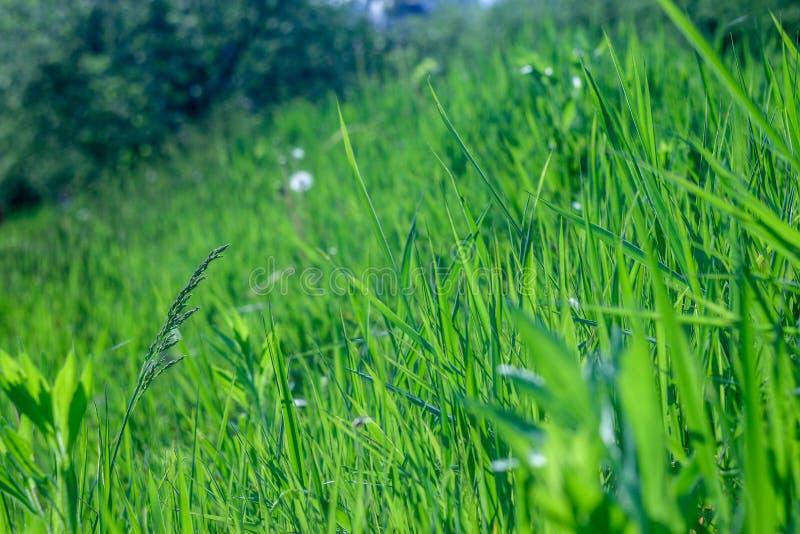Groen, vers en het gezonde gras van de lente? royalty-vrije stock afbeeldingen