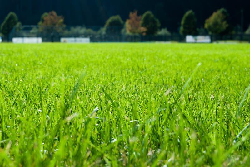 Groen vers gras van een voetbalgebied stock foto