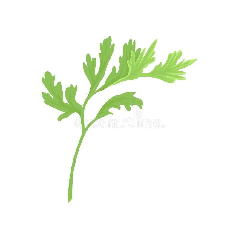 Groen vers selderieblad op witte achtergrond vector illustratie