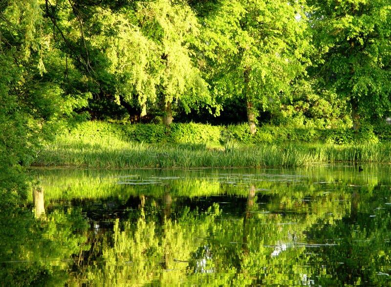 groen water stock afbeeldingen