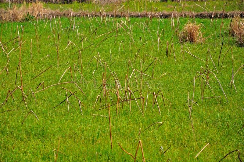 Groen Wild gebied royalty-vrije stock foto's