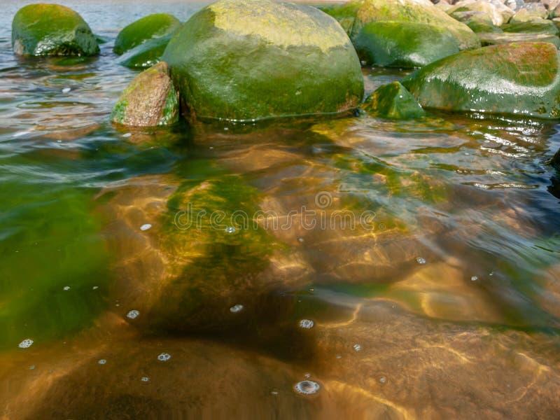 Groen zeewier, overzeese kiezelstenen royalty-vrije stock fotografie