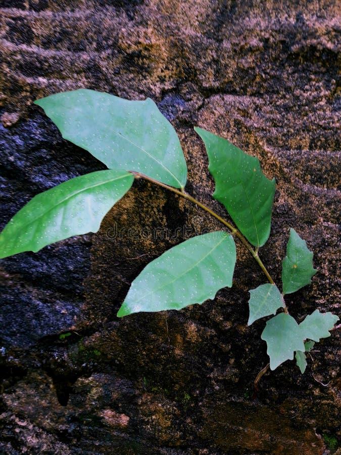 Groenachtige bladeren stock fotografie