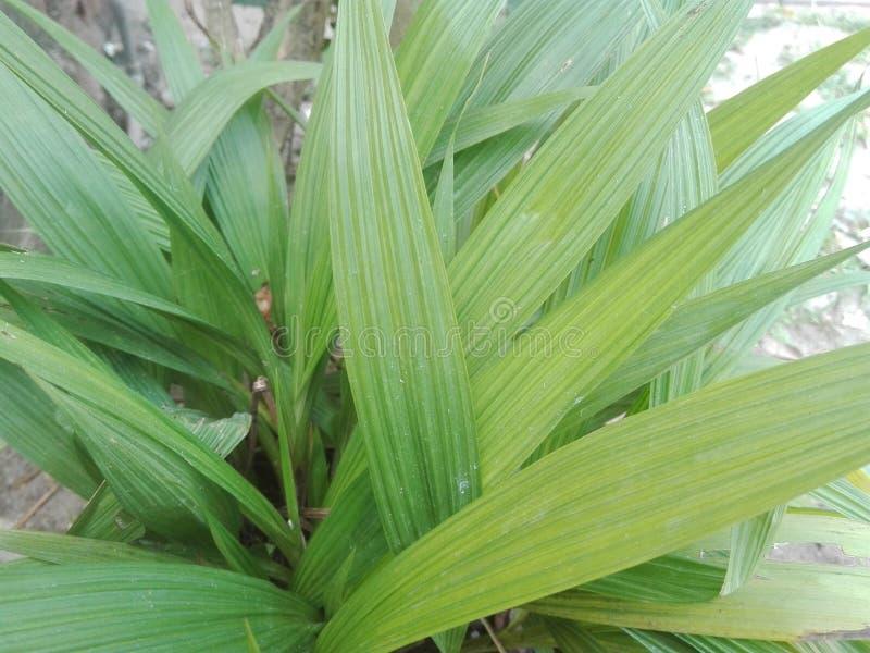 Groenachtige zeer mooie boombladeren stock foto
