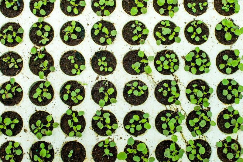 Groende av växter royaltyfri fotografi
