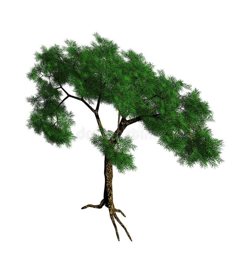 Groene 3d ceder vector illustratie