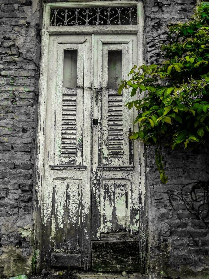 Groene aanraking in een uitstekend oud huis Recife royalty-vrije stock afbeelding