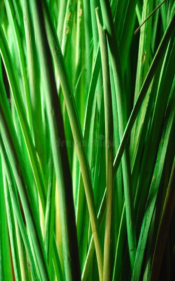 Groene aard