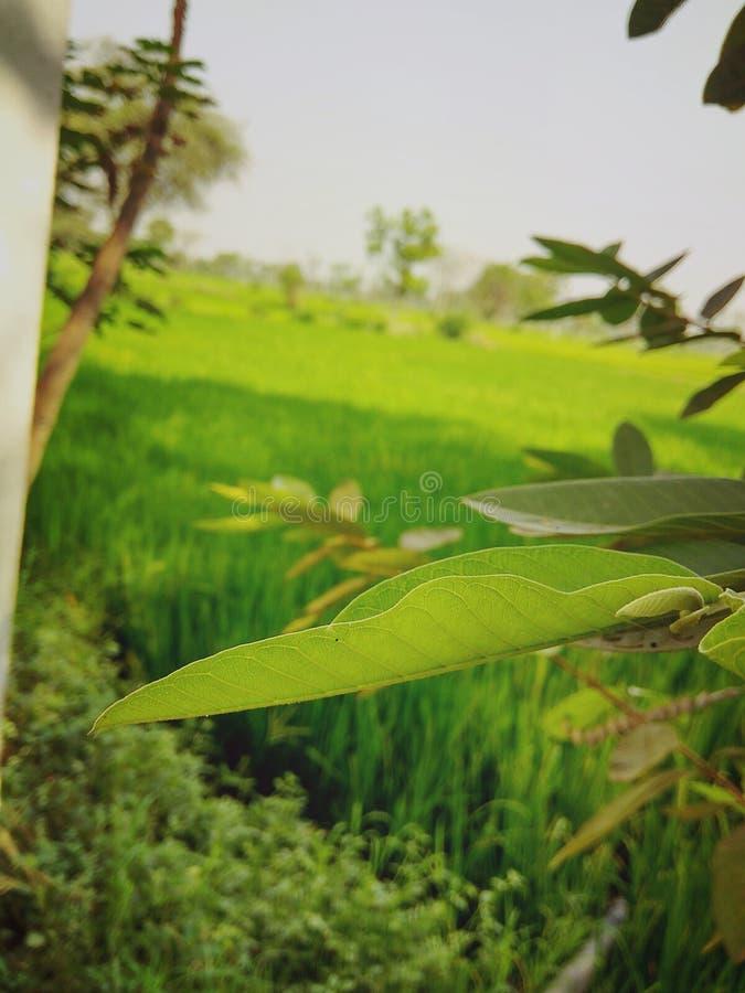 Groene aard stock foto
