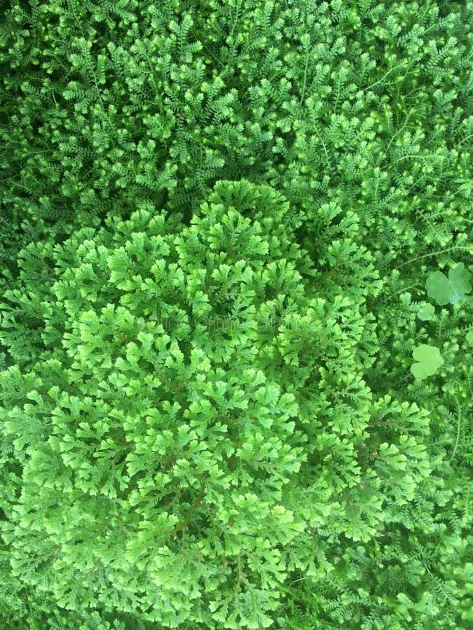 Groene aard royalty-vrije stock foto