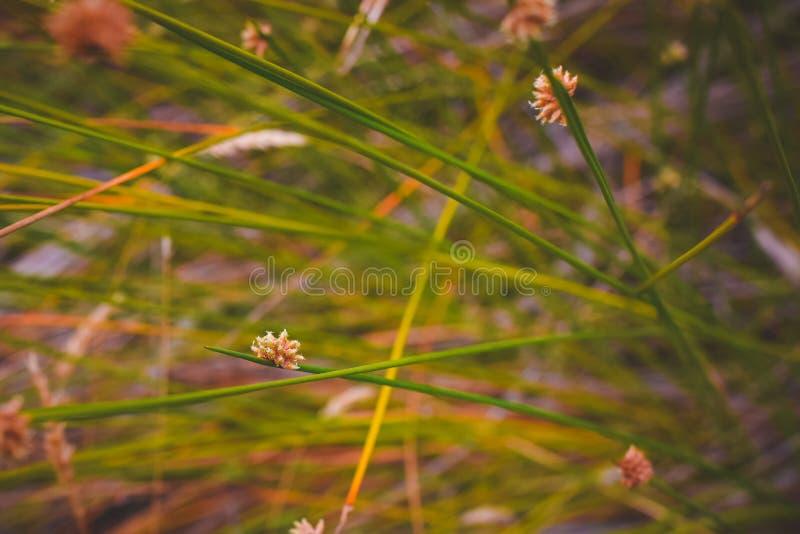 Groene aard; gentl het weiland van het ontspanningsgras stock foto