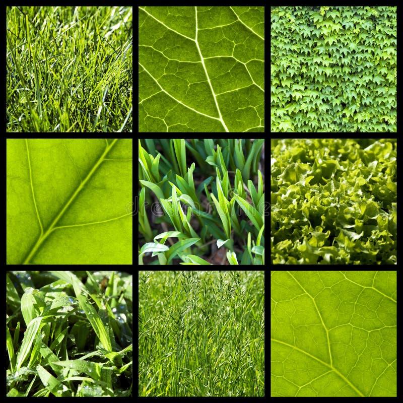 Groene aardachtergrond - collage royalty-vrije stock afbeeldingen