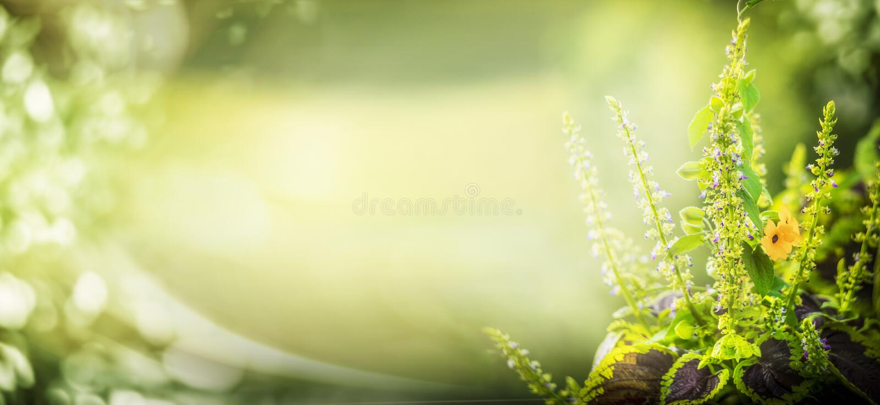 Groene aardachtergrond met tuininstallatie en bokeh verlichting, bloemengrens stock foto