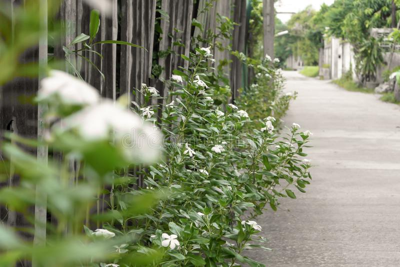 Groene aardtuin en bloei stock afbeeldingen