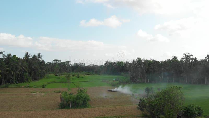 Groene Achtergrond 4K het vliegen hommelvideo van padieveld op het eiland van Bali Groen en geel landschap Rijstlandbouwbedrijf,  royalty-vrije stock foto