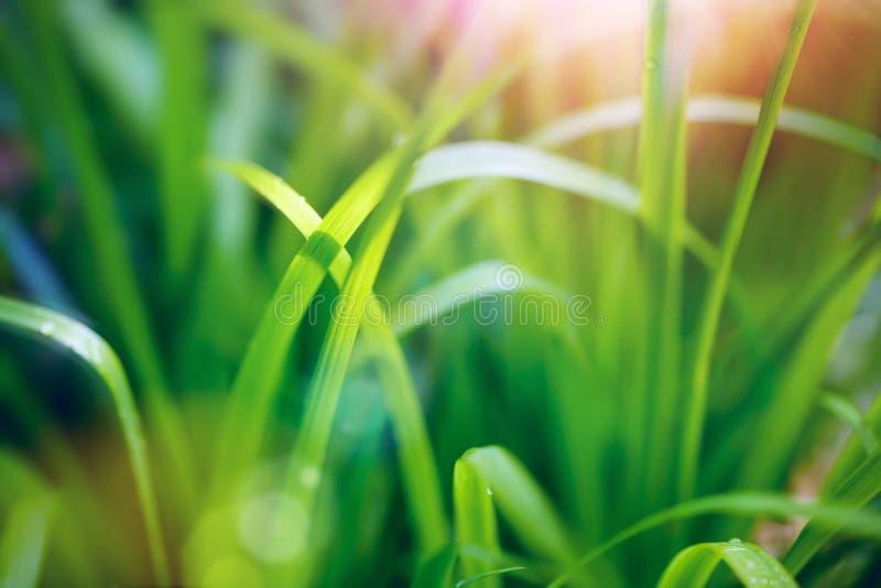 Groene achtergrond met kleur bokeh. Kleine Diepte van Gebied (DOF) stock afbeeldingen