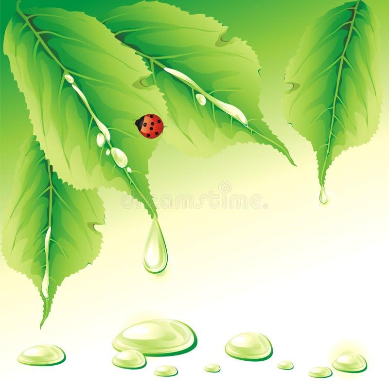 Groene achtergrond met onzelieveheersbeestje. royalty-vrije illustratie