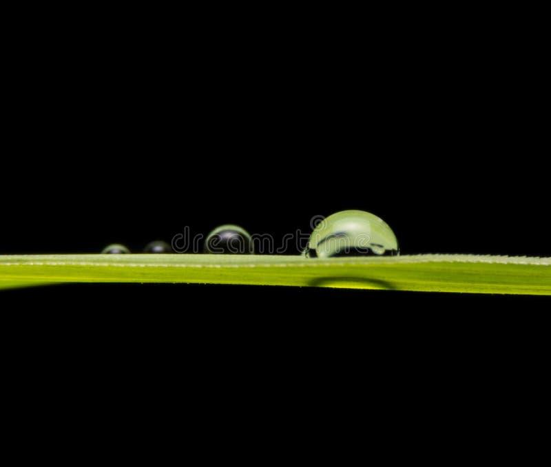 Groene achtergrond met zwarte royalty-vrije stock afbeelding