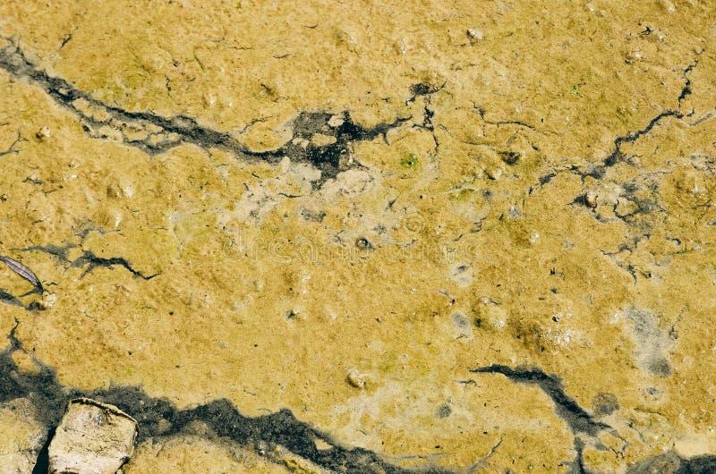 Groene algenachtige bloei in water Oppervlaktebarsten van vloeibare stroom modder Geen persoon stock fotografie