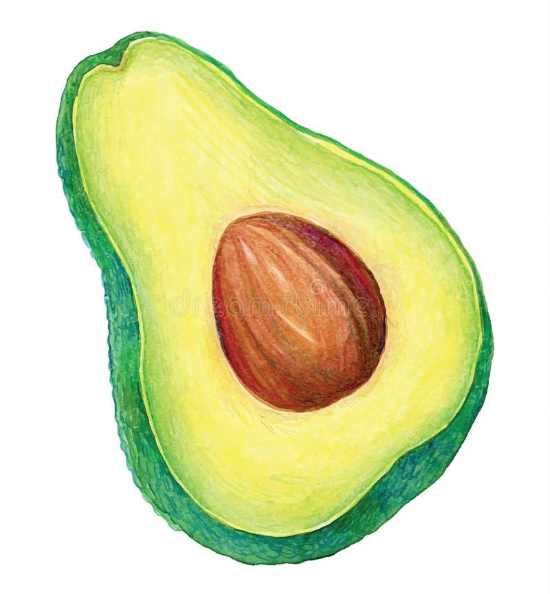 Groene Avocado stock illustratie