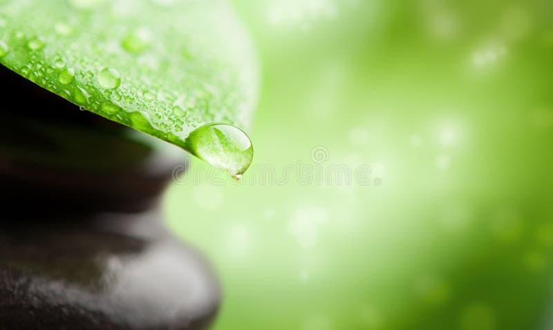 Groene background spa. blad en waterdaling royalty-vrije stock afbeeldingen