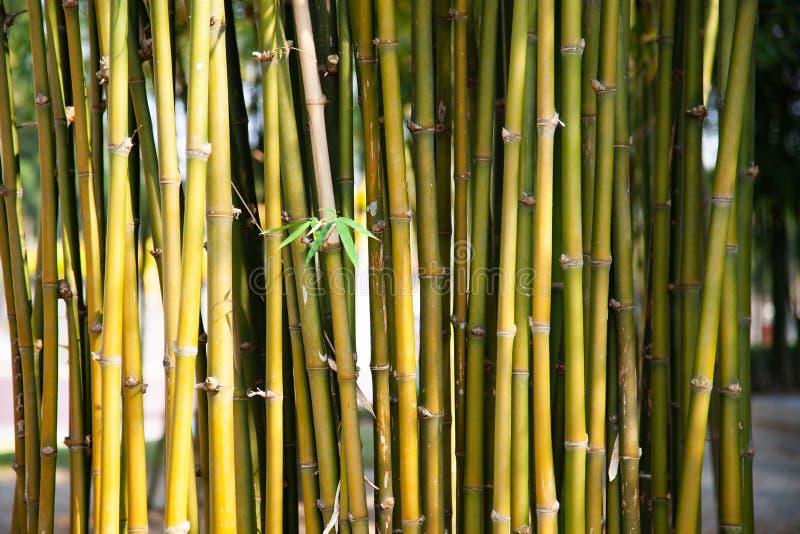 groene bamboeachtergrond stock afbeelding