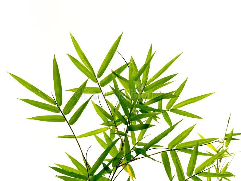 Groene bamboebladeren op aard bosachtergrond stock afbeeldingen