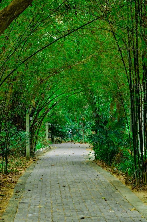 Groene bamboeboom royalty-vrije stock afbeeldingen