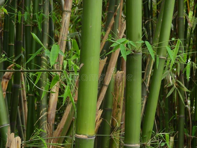 Groene bamboedetails royalty-vrije stock afbeelding