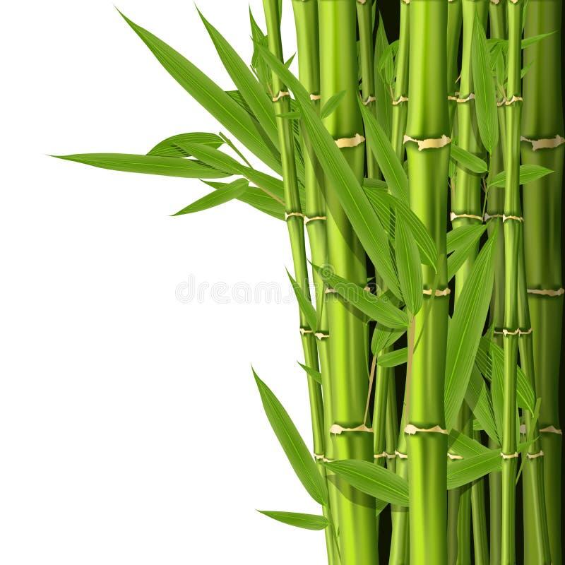 Groene bamboestammen met bladeren stock illustratie