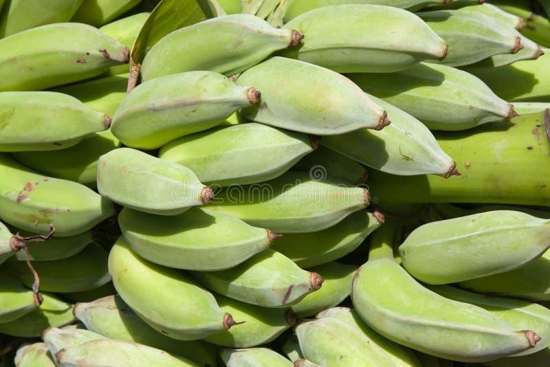 Groene banaanbos stock foto
